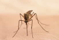 Zika Virus<br> Updates